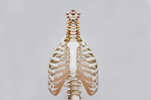 Olahraga untuk Meninggikan Badan - Kesehatan Tulang