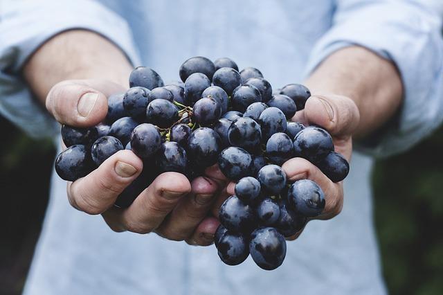 Makanan Pencegah Kanker - Anggur