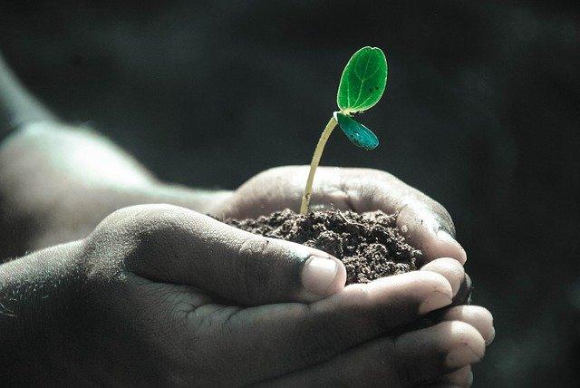 cara menanam sayuran di rumah