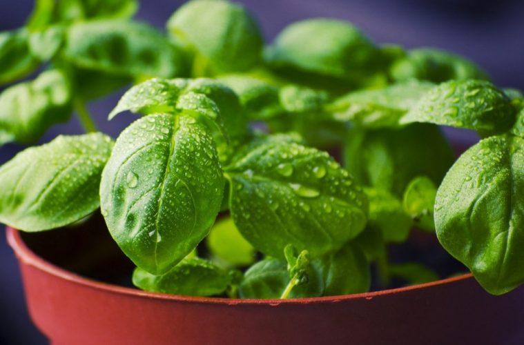 menanam sayuran di rumah
