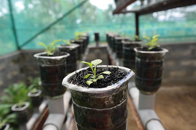 menanam sayuran hidroponik